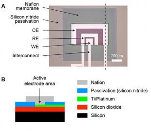 Oxygen sensor layout